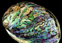 Benefits of Abalone, abalone stone, stimulating gut feeling, heart of fear sorrow negative emotions, stimulate psychic development,