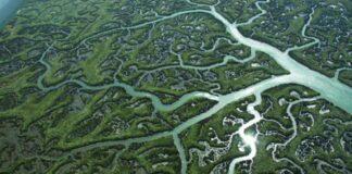 Water Veins effects litairian